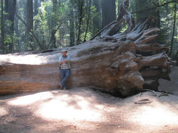 10_John and redwood tree