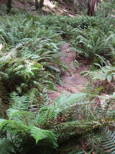21_Mont2_ trail through ferns