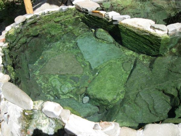 26_lower springs pool-1