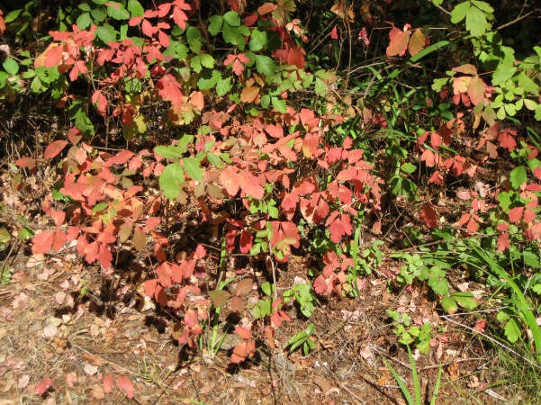 29_along with the poison oak