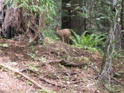 33_Mont2_deer1