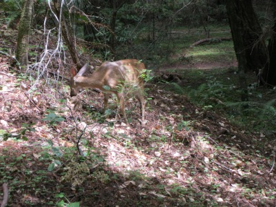 34_Mont2_deer2
