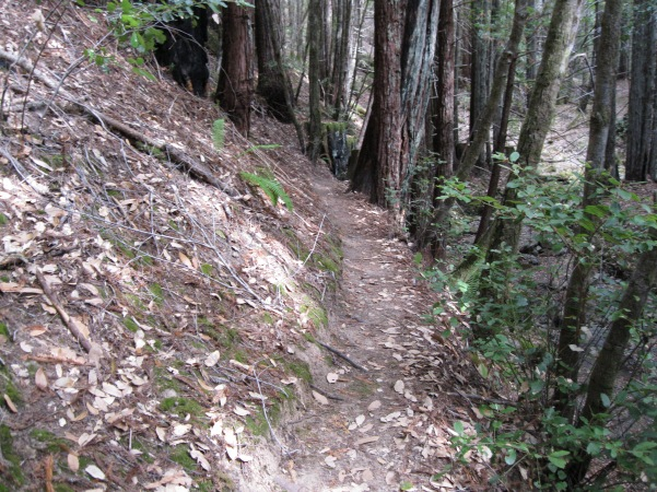 6-Mont1_trail_got_narrower