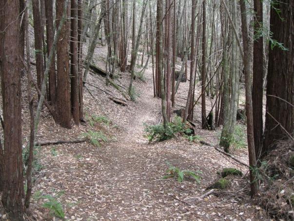 7_Mont1_forest_got_thinner