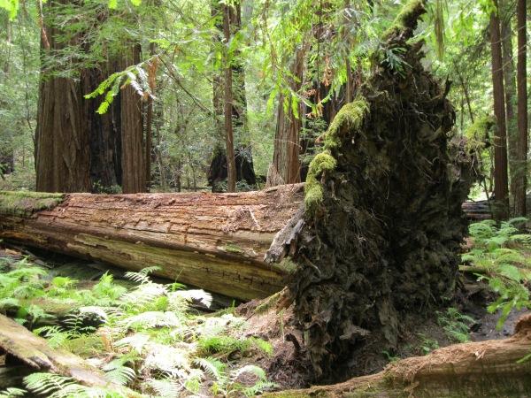 7_Mont2_further along, fallen tree