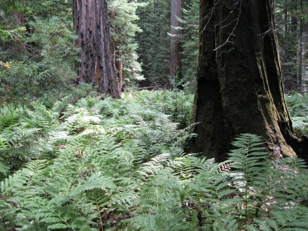 8_Mont2_flood of green ferns