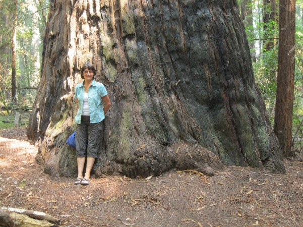 9_Louise and redwood tree