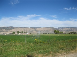12d_irrigated fields west of town