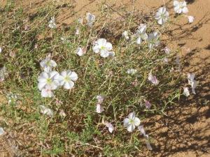 15b_flowers