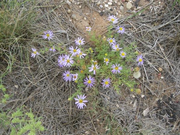 18_flowers5