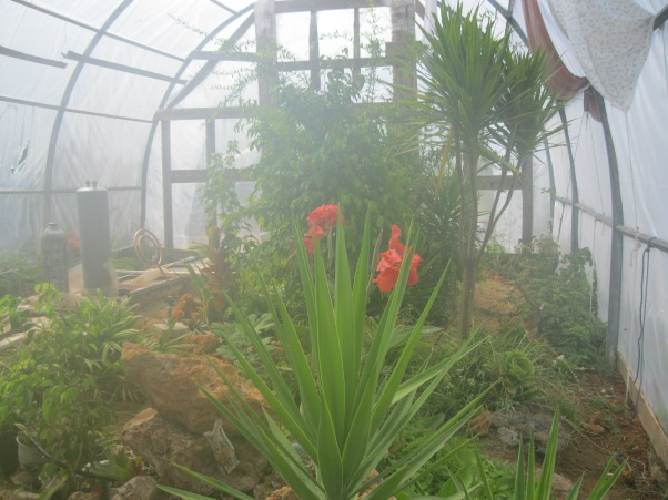 18_inside the green house