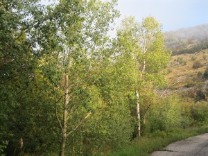 20_and aspen trees, not yet seen