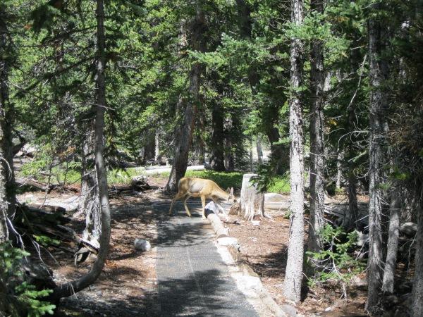 32_the inevitable deer