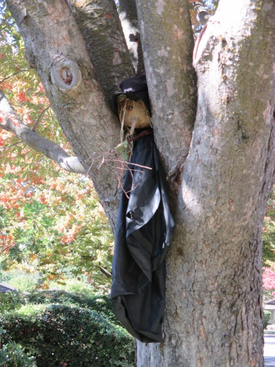 12_witch in tree