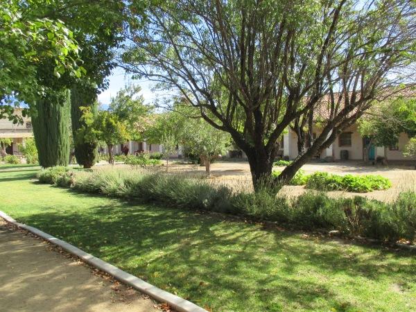 14_garden - lawn