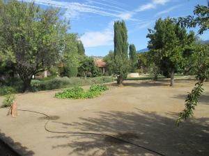 15_garden - trees