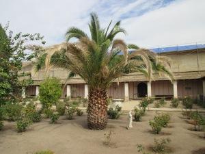 16_garden - palm tree