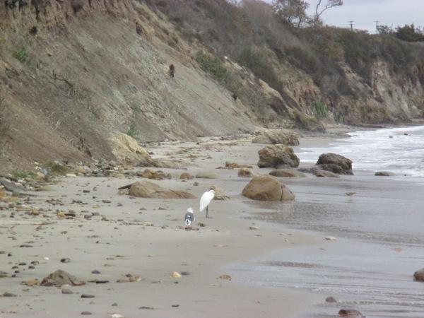 23_pelican 1