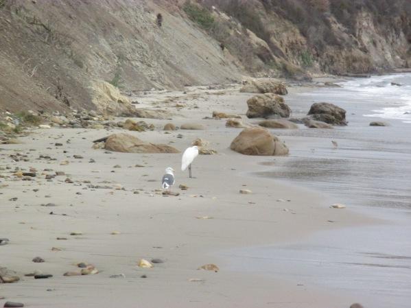 23_pelican 2