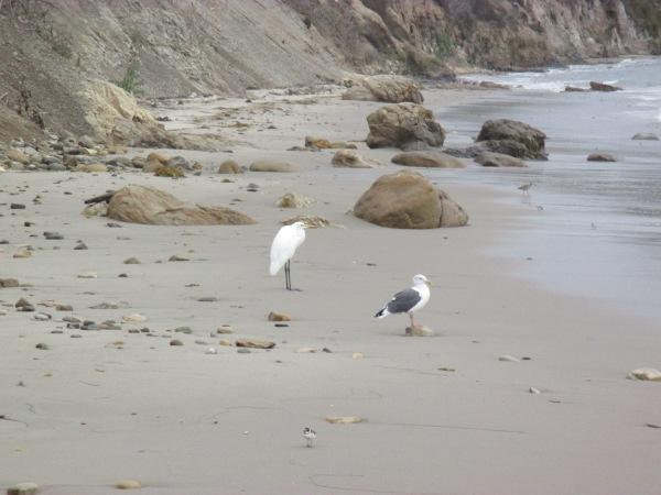 23_pelican 3