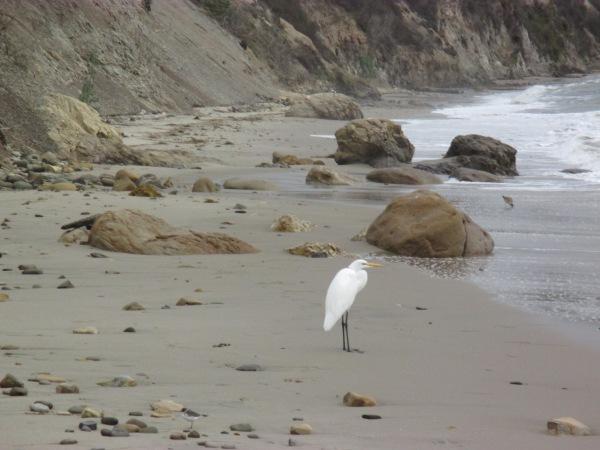 23_pelican 4