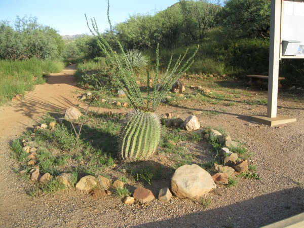 26_Plants_barrel cactus 1