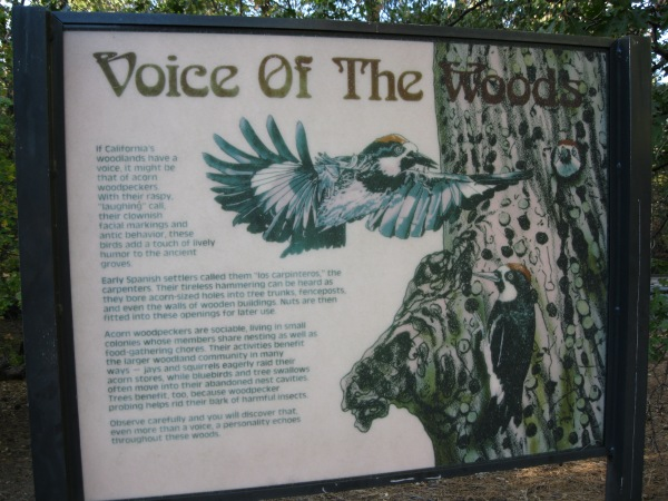2_Voice of the forest_sign