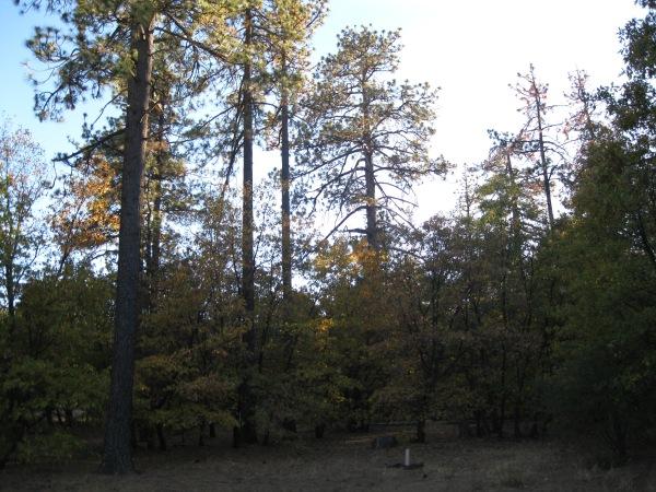 8_Alpine forest