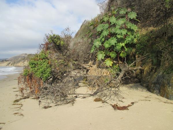 8b_beachlife tree