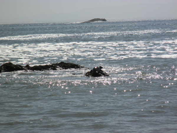 9_seal sunbathing on rock in cove