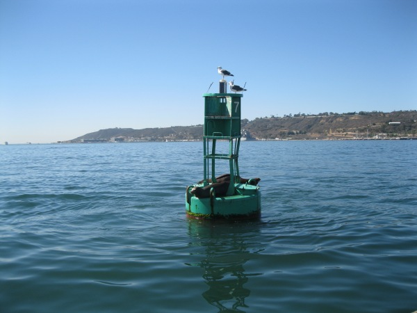 c9_on the bay_seals
