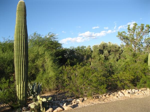 Cacti 2 + vegetation