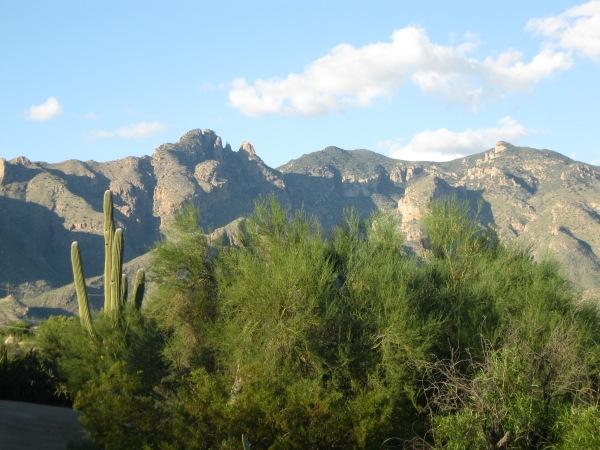 Catalina 3 + cactus