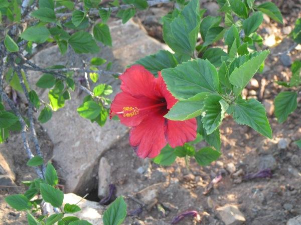 e11_red flower