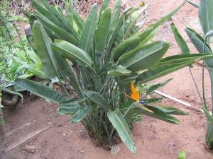 e12_orange flower