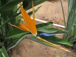 e13_orange flower bis