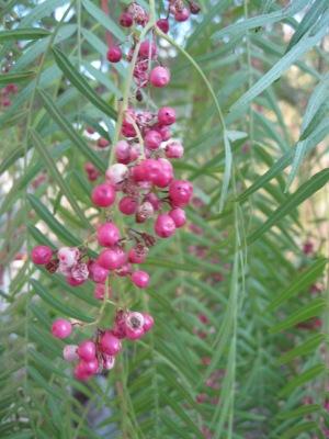 e7_...berries