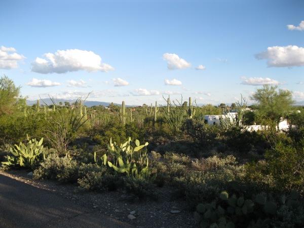 House + cacti